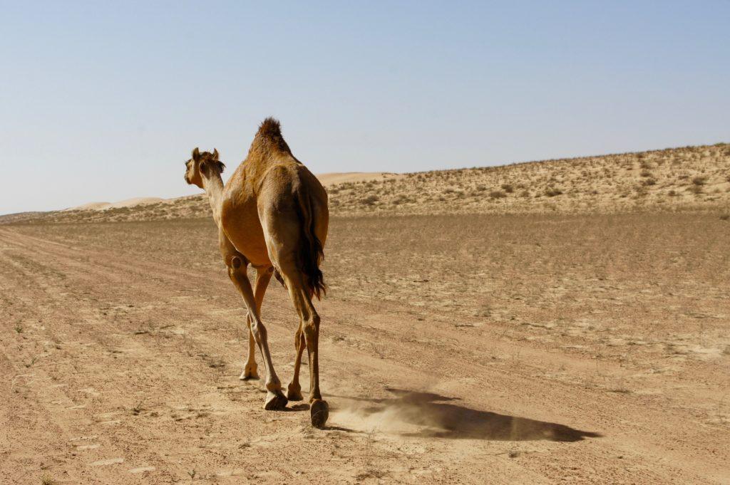 Rondreis Oman, Azië