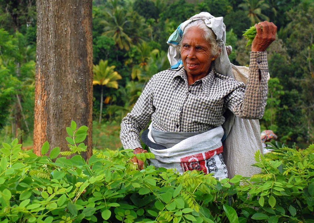 Rondreis Sri Lanka, Azie
