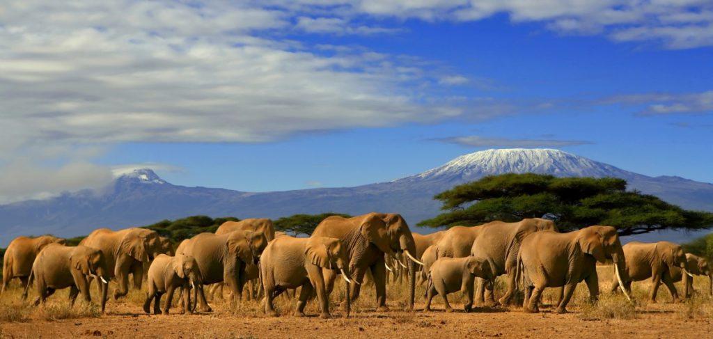 Rondreis Tanzania, Afrika
